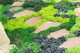 9 plantes tapissantes pour vos chemins et allées