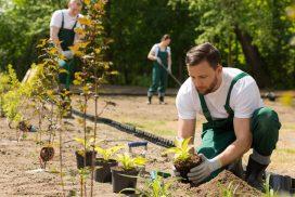10 astuces de jardinier à connaitre