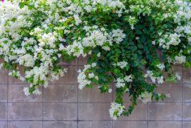 7 variétés de plantes grimpantes pour votre jardin