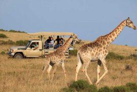 4 idées pour réaliser un Safari