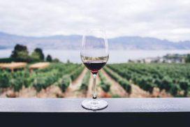 4 points à connaître sur le Vin italien